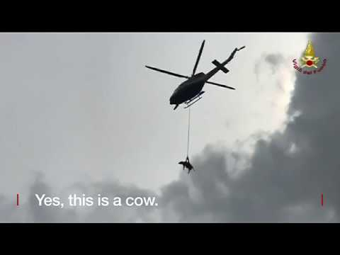 Cattle class' helicopter rescue   BBC News