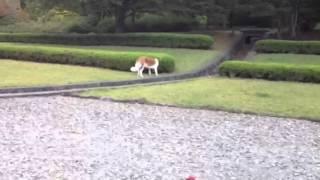 公園で遊んでいたモンローが側溝に落ちびっこを引きました。
