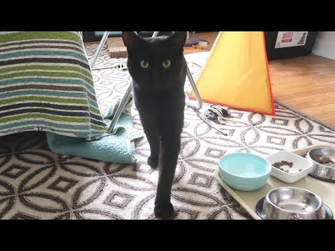 Boo Day 77 - Treats By The Gate - Training And Socializing A Feral Cat