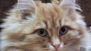 Теплый рыжий кот