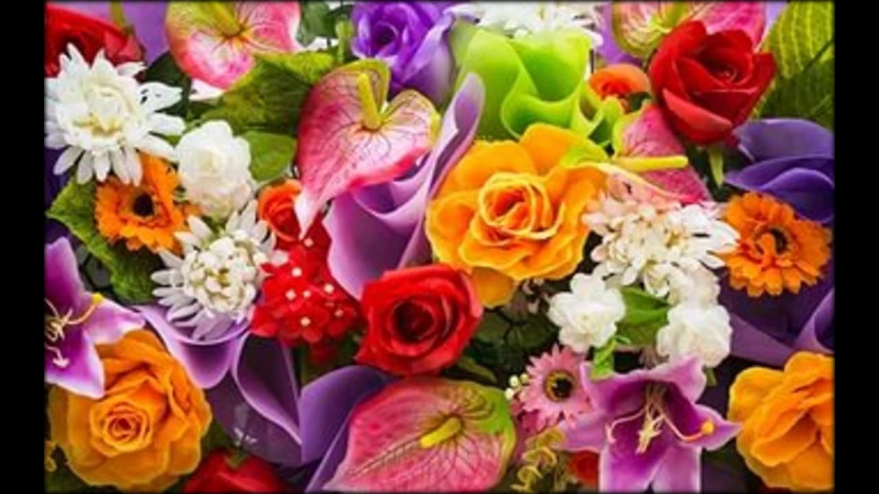 купить семена многолетних цветов+ - YouTube