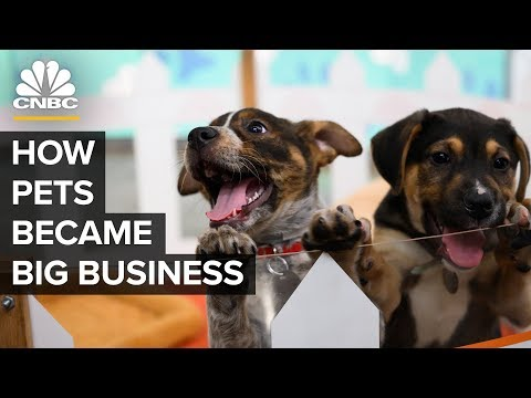 How America's Love Of Cats And Dogs Became A $72 Billion Business
