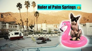 The Dark Lord Cat Takes Over Palm Springs