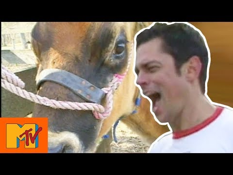🔴 Johnny Knoxville's Gets 'Intimate' With A Cow  Jackass  Live Stream
