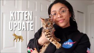 WEEK ONE WITH MY BENGAL KITTEN! (TIPS, ADVICE, WHAT TO EXPECT)