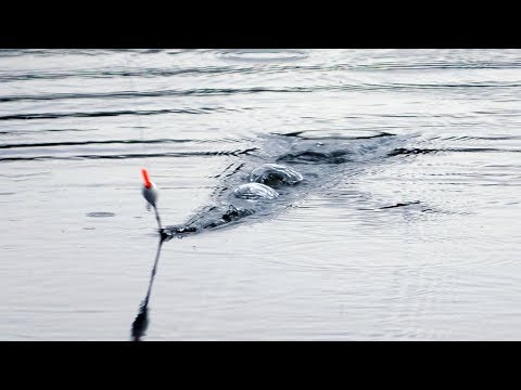 ГЛАВНАЯ ОШИБКА РЫБАКА | Весенняя рыбалка 2020 на Поплавок
