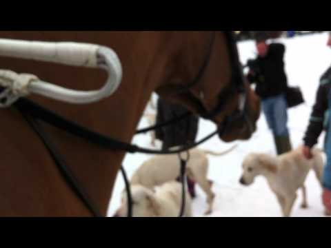 Cotswold Hunt Boxing Day Meet