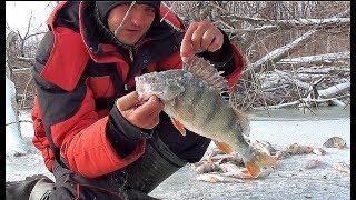 КИЛОГРАММОВЫЕ ОКУНИ РАЗДАЮТ В ЛЕСУ!!!!!!! Рыбалка по первому льду! Ловля крупного окуня и судака!