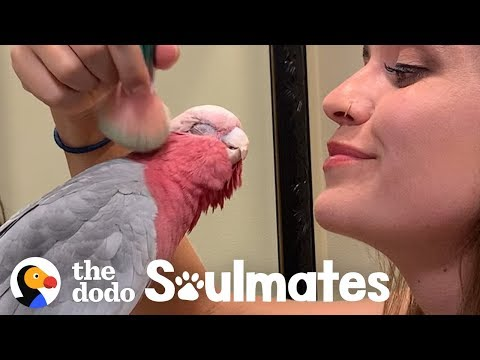 Galah Bird Wants To Be Just Like His Human Mom | The Dodo Soulmates