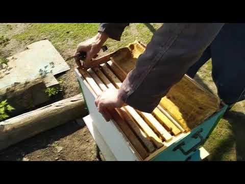 Размножение пчелосемей - отводки с минимальным количеством пчел без их слета.