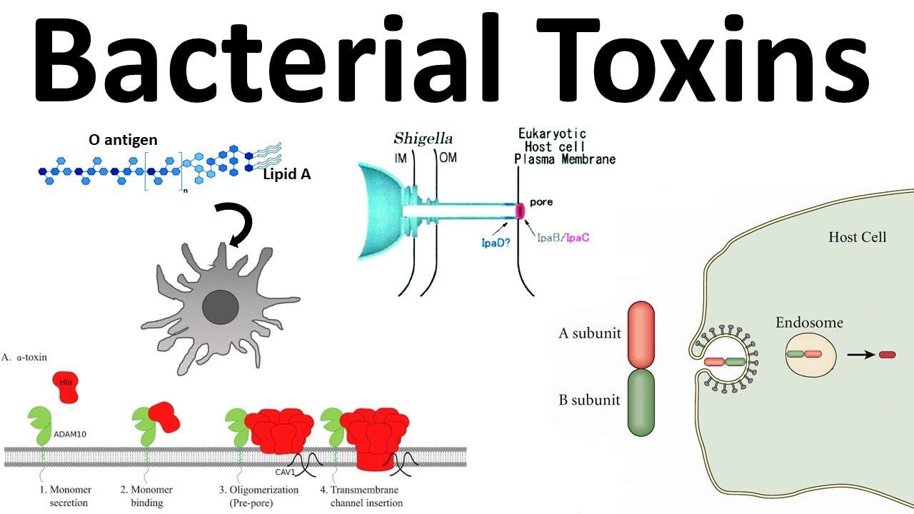 toxine bacteriene