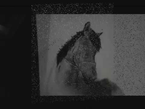 Pferd malen im Zeitraffer