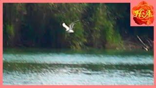 Белые птицы на пруду Птицы в полёте Красивая природа