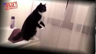 Лучшие Приколы с Кошками  Лучшие ролики 2014