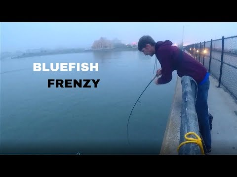 BLUEFISH FRENZY!!!!! FISHING GIANT BRIDGE IN OCEAN CITY, MD!!