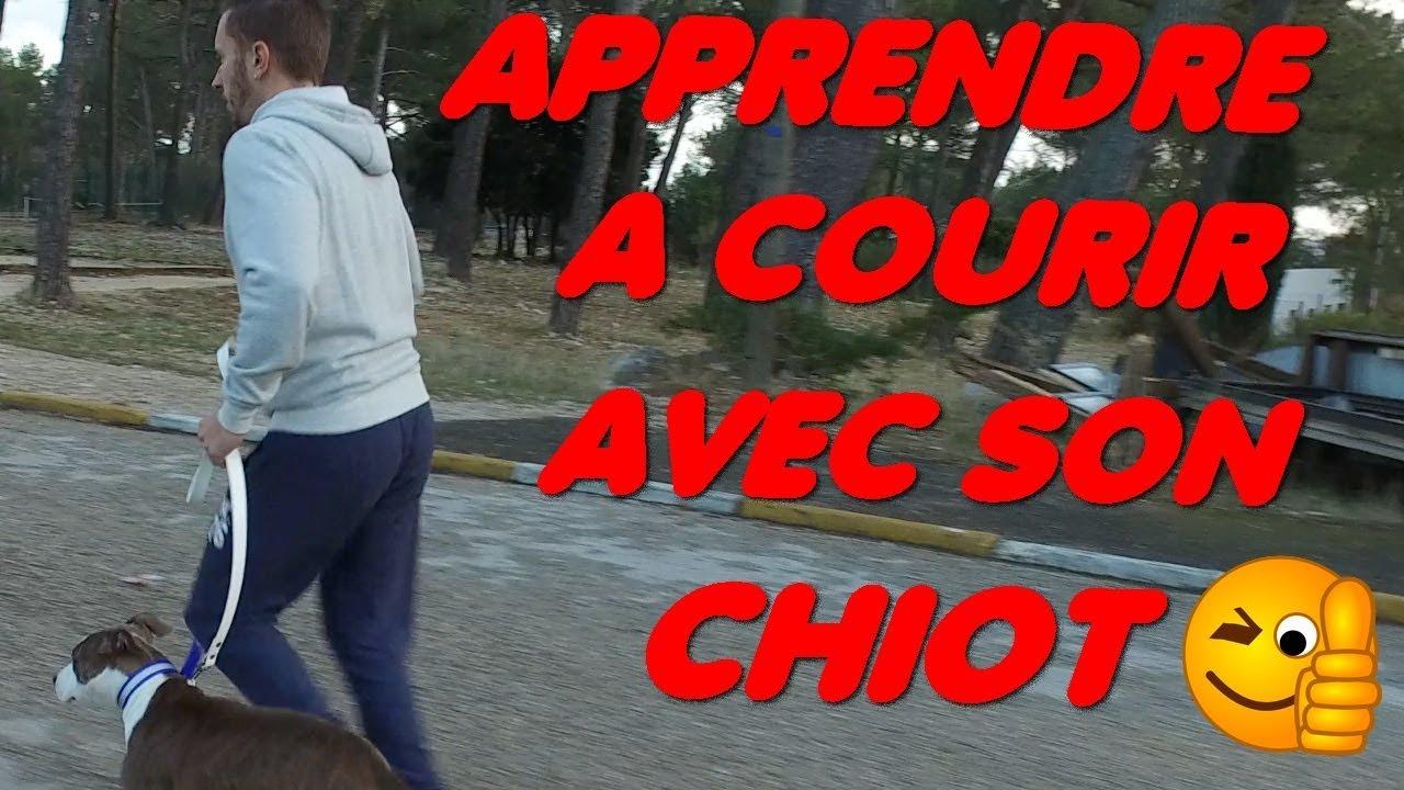 COURIR AVEC SON CHIOT AMSTAFF // ALLDOG