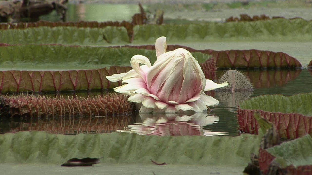Botanische tuin Bogor