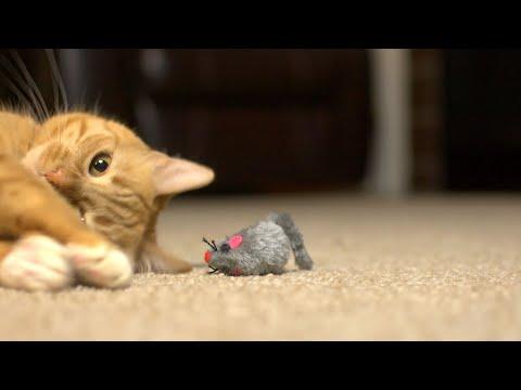 48pc Mozzarella Mice – Bulk Set Of Plush Furry Tailed Cat Toys!