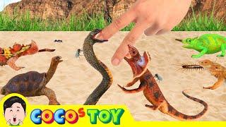 한국어ㅣ징글징글 파충류 키우기 2 어린이 파충류만화 파…