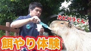 【癒し】水族館のいろんな生き物たちにごはんをあげてみました!!