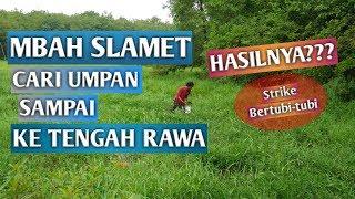 Download Video Umpan Mbah Slamet Emang Paten, Banjir Strike! Memancing Ikan Nila Umpan Lumut MP3 3GP MP4