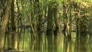 Clarks River  National Wildlife Refuge