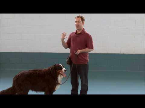Teach your dog to Walk on a Loose Leash with Tristan Flynn