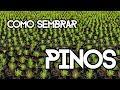 Video de Pinos