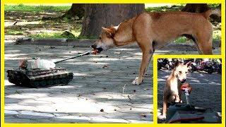Собаки и танк - Смешная реакция животных
