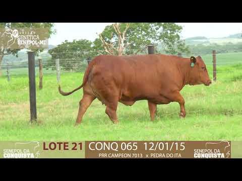 LOTE 21 CONQ 65