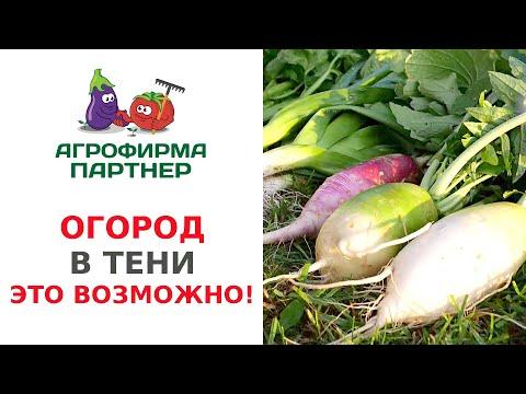 ОГОРОД В ТЕНИ. ЭТО ВОЗМОЖНО | теневыносливые | садоводство | растения | посадить | урожай | семена | огород | почва | полив | овощи