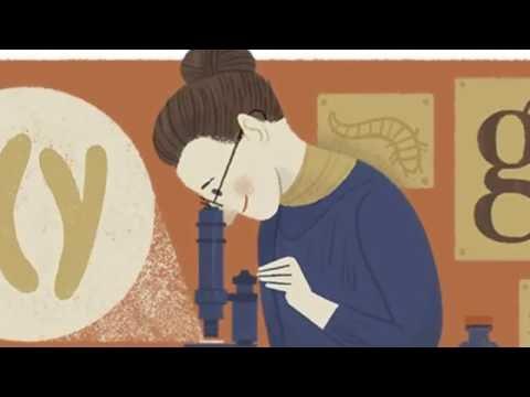 Nettie Stevens Google Doodle. Nettie Stevens is the Discoverer of Sex Chromosomes