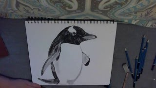 VEDA 15: Drawing a Gentoo Penguin Time-lapse