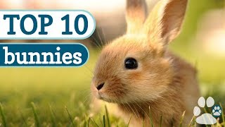 Top 10 Cutest Bunnies