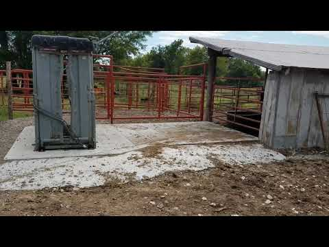P&C Cattle Pens And New Working Set Up