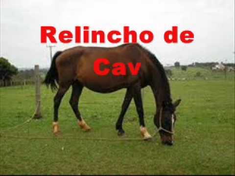 RELINCHANDO BAIXAR DO CAVALO SOM