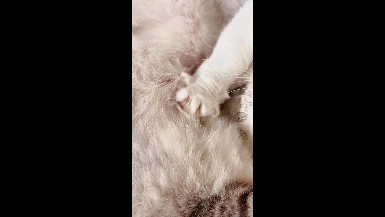 貓:我是一個沒有感情的踩奶工具| 李喜貓