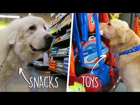 Buying Everything My Dog Touches at the Pet Store