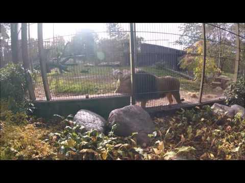 Helsinki 6 okt  en dierentuin