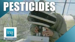 Les pesticides tueurs d'abeilles | Archive INA