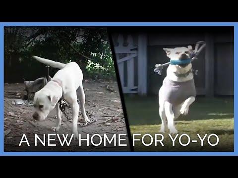 A New Home for Yo-yo the Dog