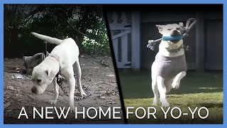 A New Home for Yo-yo the Dog