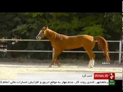 Iran Breeding Kurd horses, Kermanshah province پرورش اسب كرد استان كرمانشاه ايران