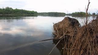 Место для рыбалки - р. Десна, с. Крехаев - GPS-координаты(Место для рыбалки - р. Десна, с. Крехаев. Рыболовные снасти я покупаю на Aliexpress: https://goo.gl/KN9wUM Ловили на фидер..., 2015-05-02T04:33:47.000Z)