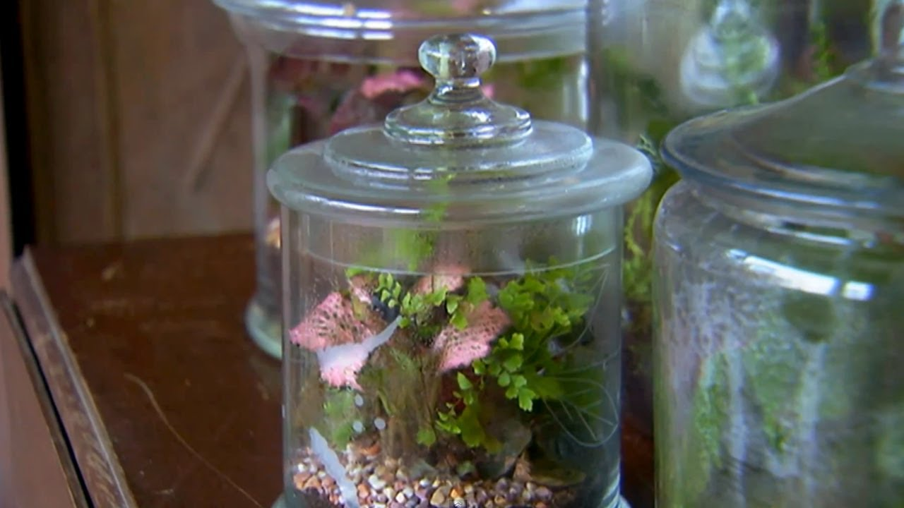 How To Build A Terrarium P Allen Smith Classics Youtube