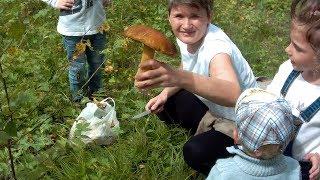 Охота на грибы и поцелуй с лягушкой