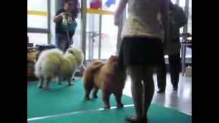 Выставка собак всех пород. Ижевск 26.10.2013.