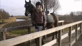 Te koop: Lieve Welsh D-pony !