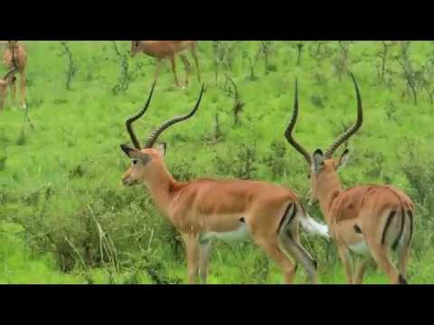 The Wildlife Of Rwanda