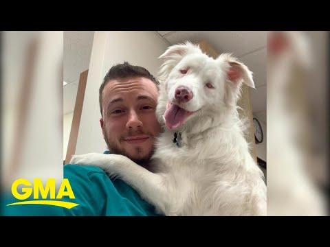 Blind and deaf dog is so loved by transgender dad, 'I kind of see herself in me' l GMA Digital